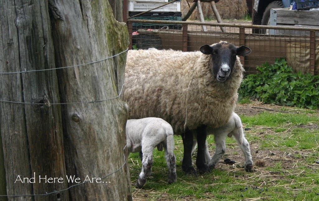 A Pastoral Easter