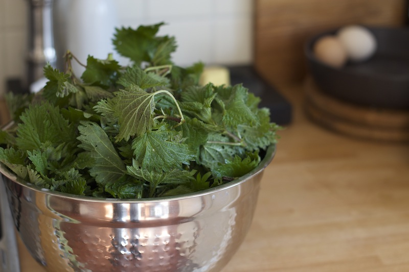 What to Do With Stinging Nettles