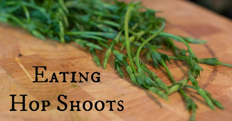 Eating Hop Shoots