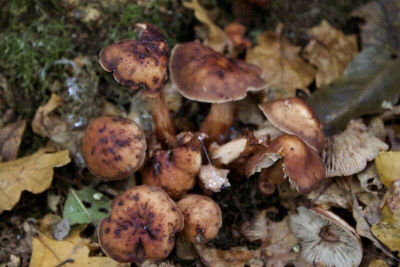 Start Learning to Forage for Mushrooms– Take a Walk in the Woods